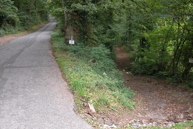 Footpath in Capler Wood