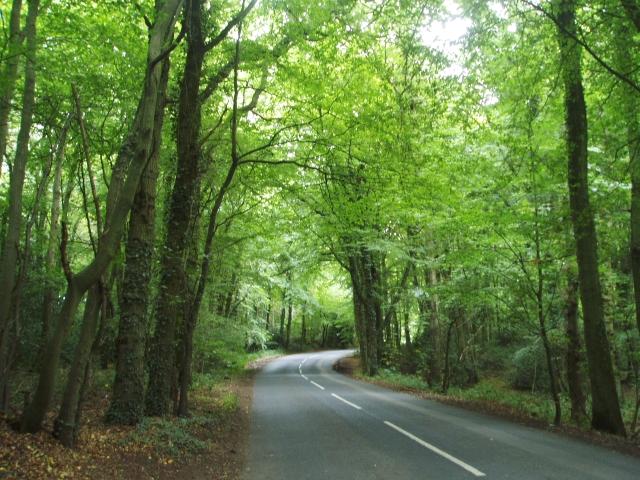 Merle Common woodland