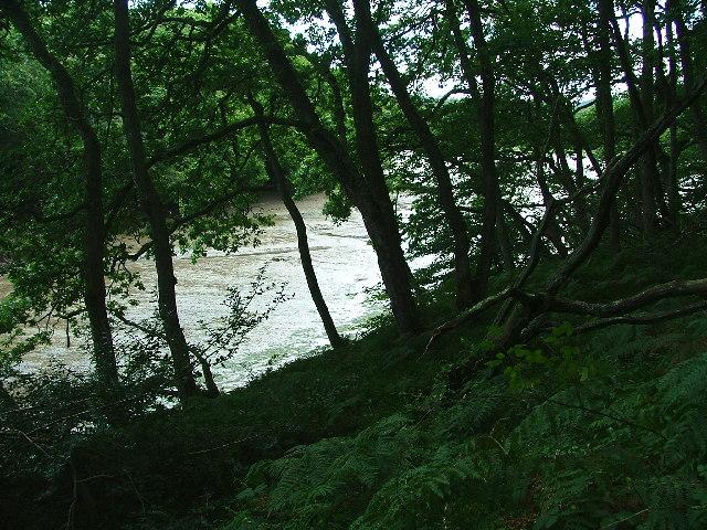Wembury Woods