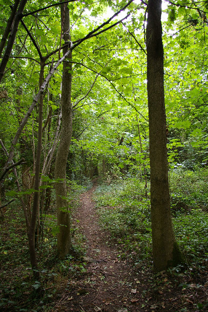 In Foxley Wood