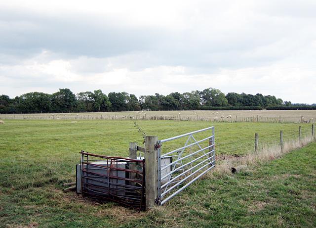 Field near Dorsington
