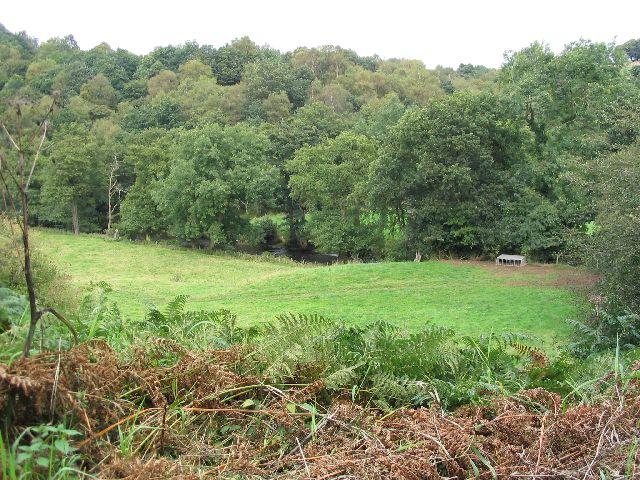 Pasture and River Dane