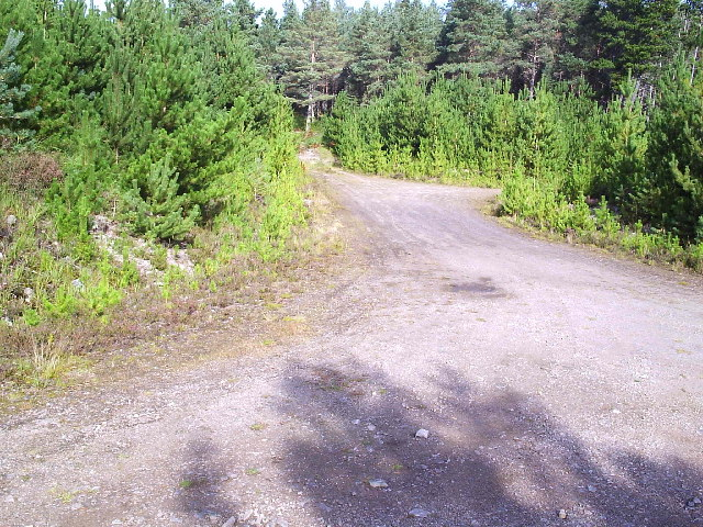Forestry Road