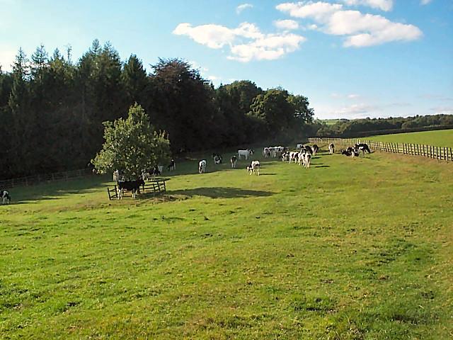 Pasture west of Denton