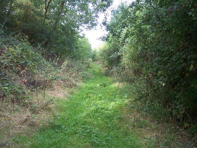 Worcester & Bromyard Railway Cutting, Lusley