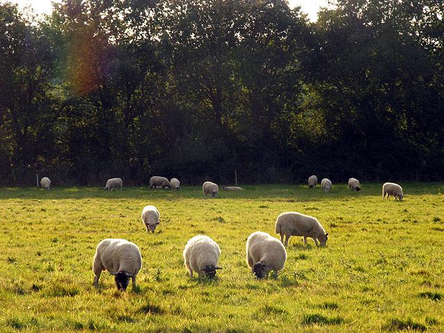 Pasture near Benham Marsh