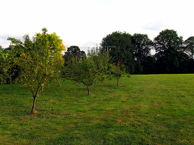 Orchard at Ball Hill