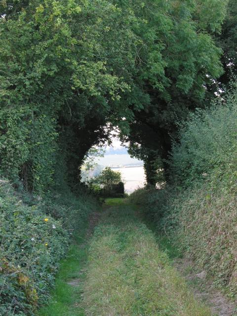 Old Down Lane looking towards Morestead