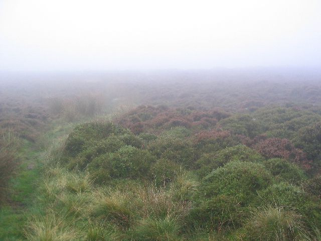 Foggy Moorland