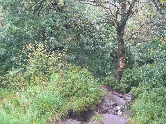 Gradbach Wood