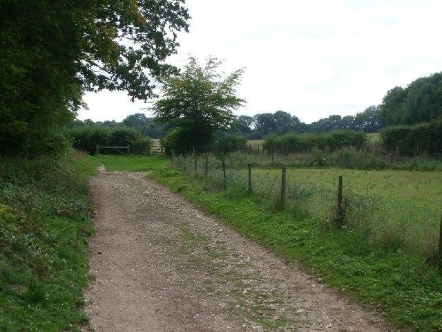 Junction of bridleways on Fetcham Downs