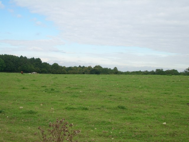 Fields east of bridleway