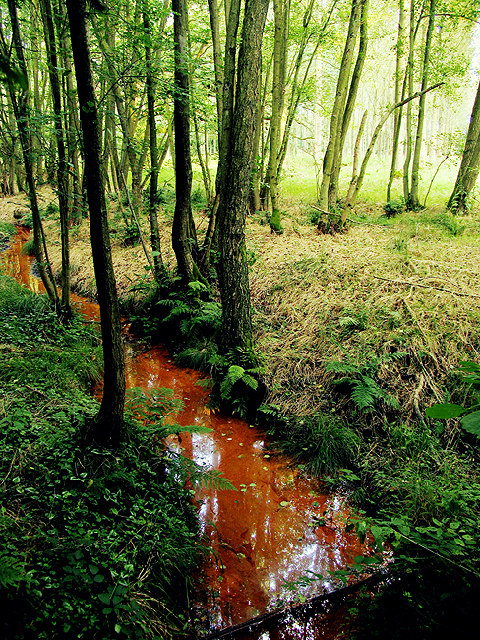 Stream in Clere Wood