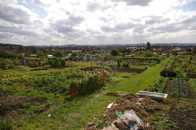 Spa Hill Allotments