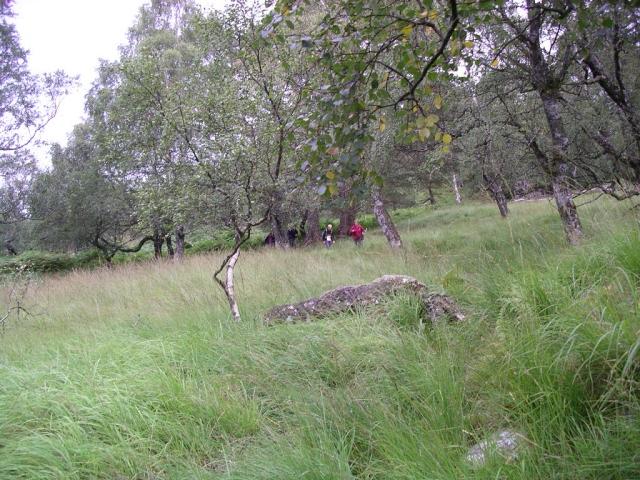 Crannach Wood