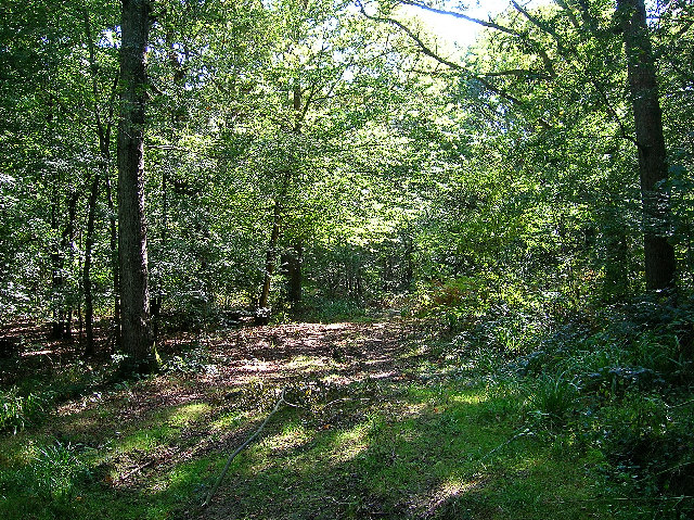 Lashmar Wood, Wivelsfield Green