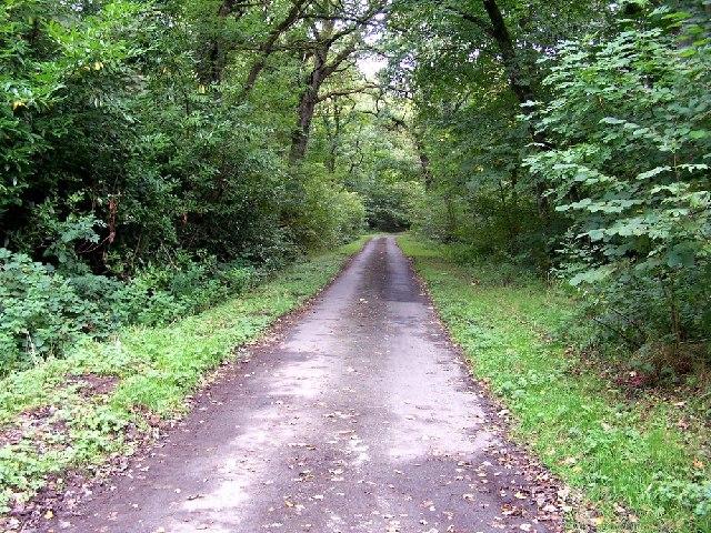 Poundland Wood