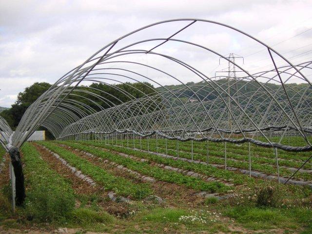 Farmland near Old Hill Court