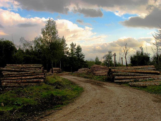 Brown Hill Plantation near Newtown