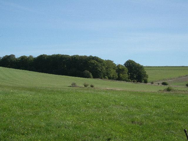 Old Warren near Seven Barrows