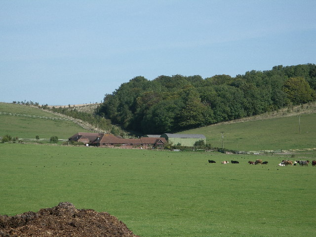 Down Barn Farm with Old Plantation in background.