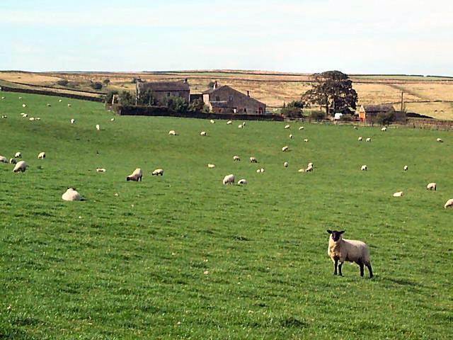 New Redcar Farm