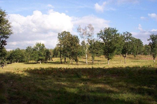 Jordan Hill, Whitmoor Common