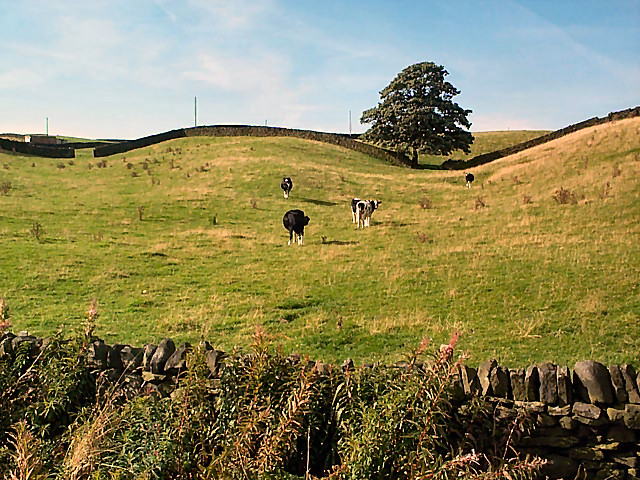 Undulating pasture near Cutshaw Farm