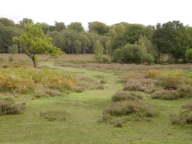 Path across White Moor, New Forest
