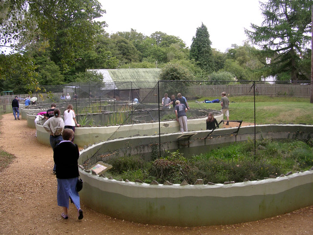 New Forest Reptile Centre, Holidays Hill, New Forest