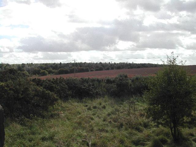 Gorse and farmland