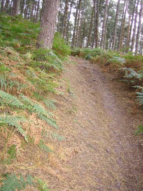 Path on Cannock Chase