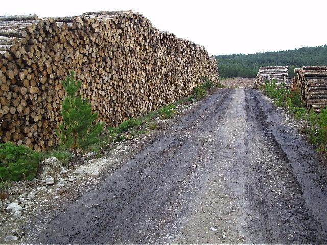 A few logs