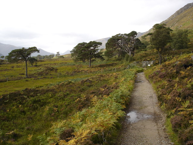 Path on North side of Loch Affric