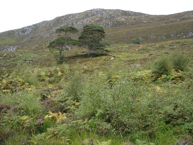 Looking up the hillside of Sgurr na Lapaich