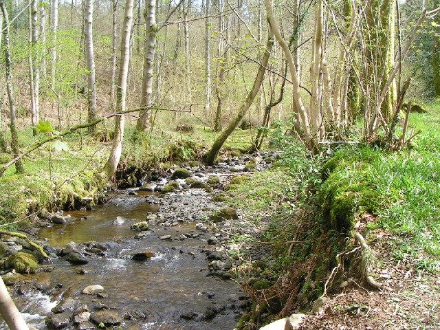 Springs Wood, Near Keswick