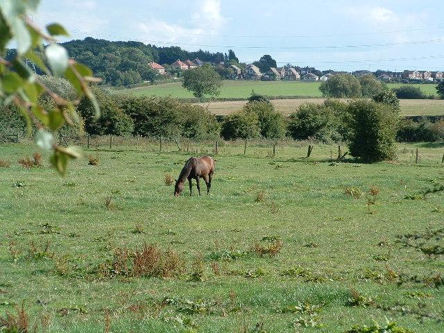 Fields near Goody Cross