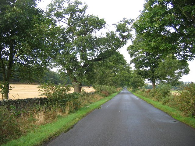Oaklined road.