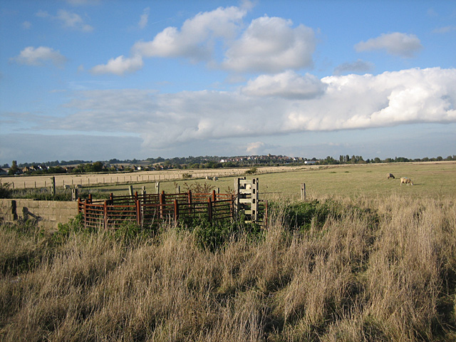 Pasture near Rye