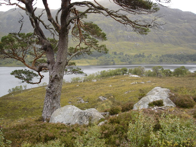Hillside down to Loch Affric