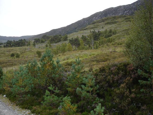 Woodland above Loch Affric