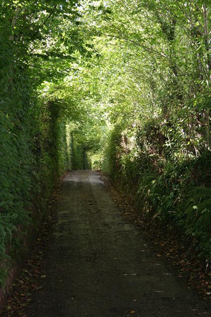 Holcombe Rogus: lane near Redhill Farm