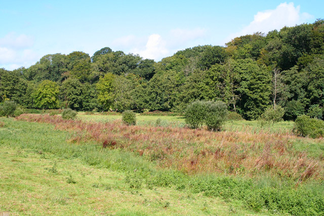 Thorne St Margaret: Rewe Mead Nature Reserve