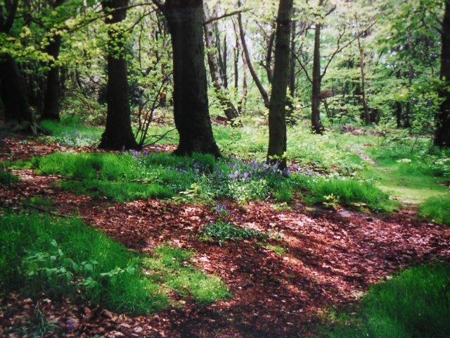 Wombwell Wood