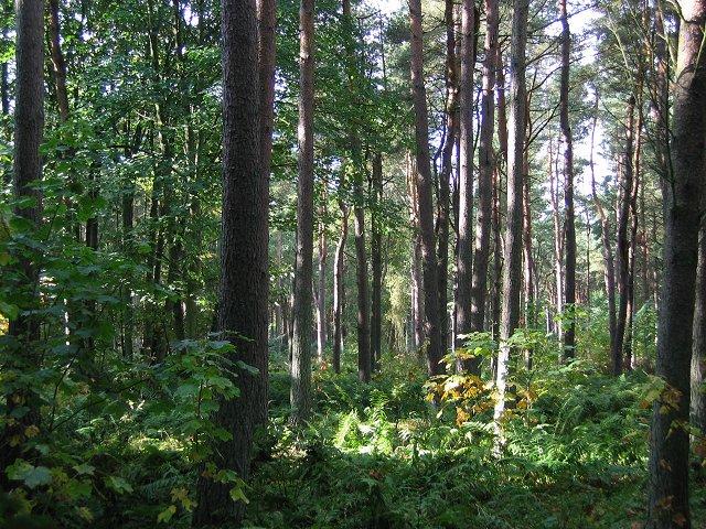Tentsmuir Forest, Kinshaldy.