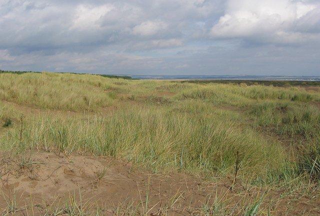 Dunes, Tentsmuir.