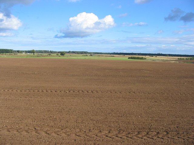 Newly planted, Kirkland.