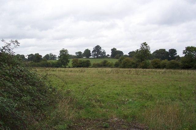 Fields at Wood Street Village