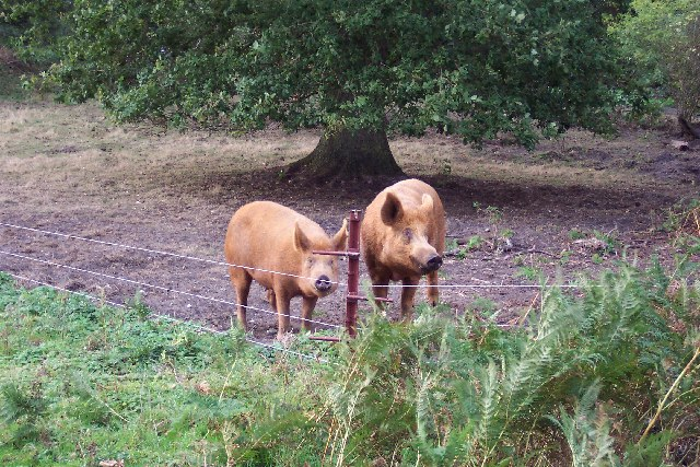 Merrist Wood livestock