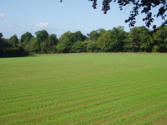 Wheeler's Wood or Newnham's Rough